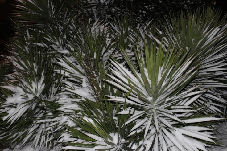 Blades of Snow